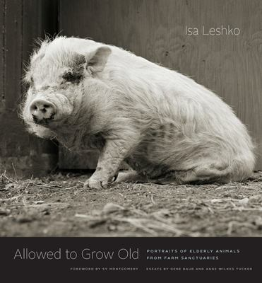 Allowed to Grow Old - Portraits of Elderly Animals from Farm Sanctuaries