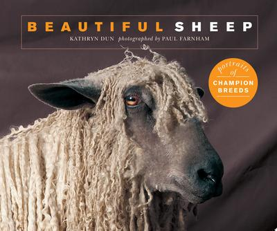 Beautiful Sheep - Portraits of Champion Breeds