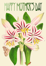 Homepage amaryllis happy mother s day