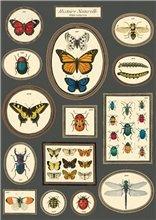 Wrap - Natural History Butterflies