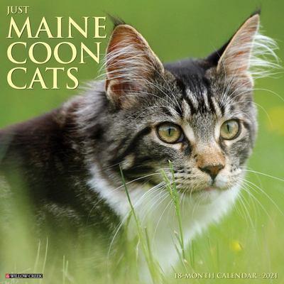Just Maine Coon Cats 2021 Wall Calendar