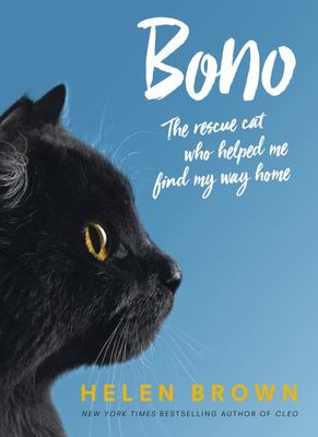Bono - Rescue Cat Who Helped Me Find My