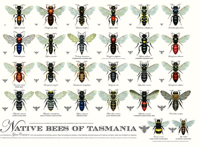 Native Bees of Tasmania poster