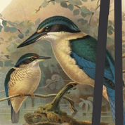 Bookmark - King Fisher