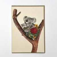 Homepage_koala_cuddle