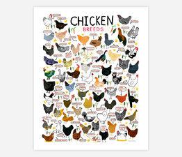 "Chicken Breeds 8""x10"""