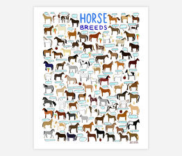 Large onelaneroad horse breeds print main 5d87ef20cd771 262