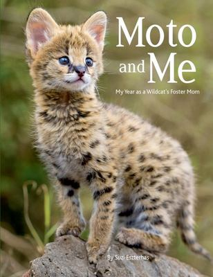 Moto and Me - My Year As a Wildcat's Foster Mom