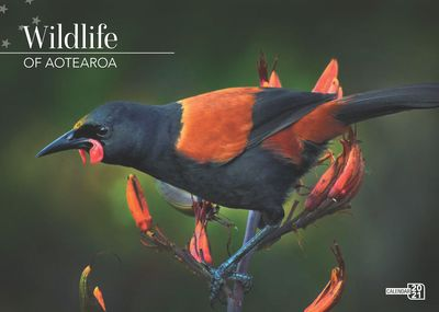 New Zealand Wildlife 2021 Calendar