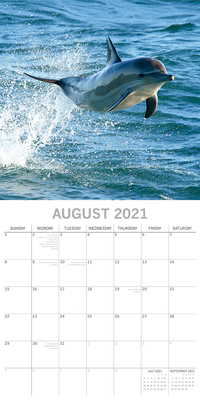 16 Month Calendar 2021: Dolphins