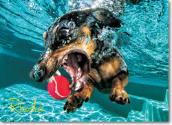 Underwater Dog: Rhoda Jigsaw