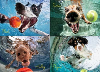 Underwater Dogs: Play Ball Jigsaw