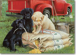 Just Dogs Jigsaw