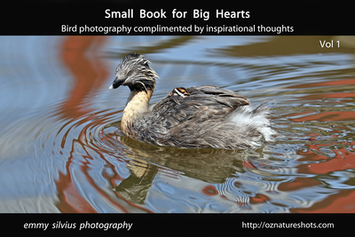 Small Book for Big Hearts: Bird Photography and Inspirational Thoughts
