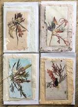 Homepage seaweed bookmark cards