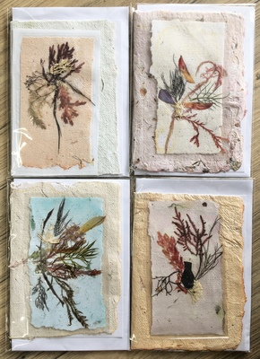 Large seaweed bookmark cards