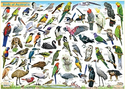 Birds of Australia A3 Placemat Postermat Chart Poster Laminated - QPA