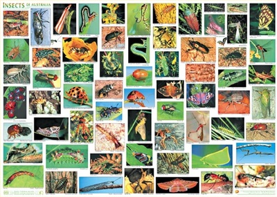 Insects A2 Laminated Chart Poster - QPA