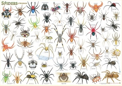 Spiders of Australia A2 Laminated Chart Poster - QPA