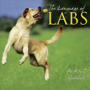 The Language of Labs