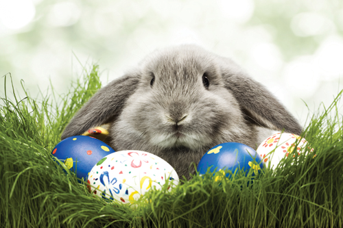 The Truth About Easter, Bunnies And Eggs