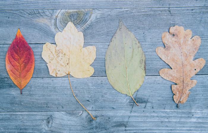different tree leaves laid on wood