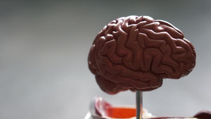plastic brain