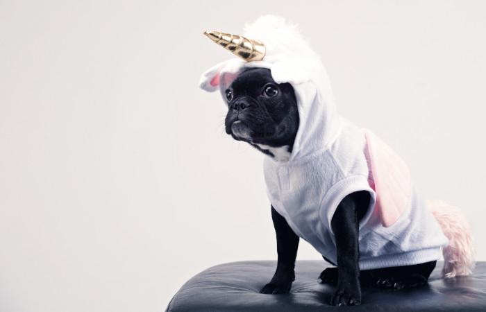 dog wearing a unicorn costume