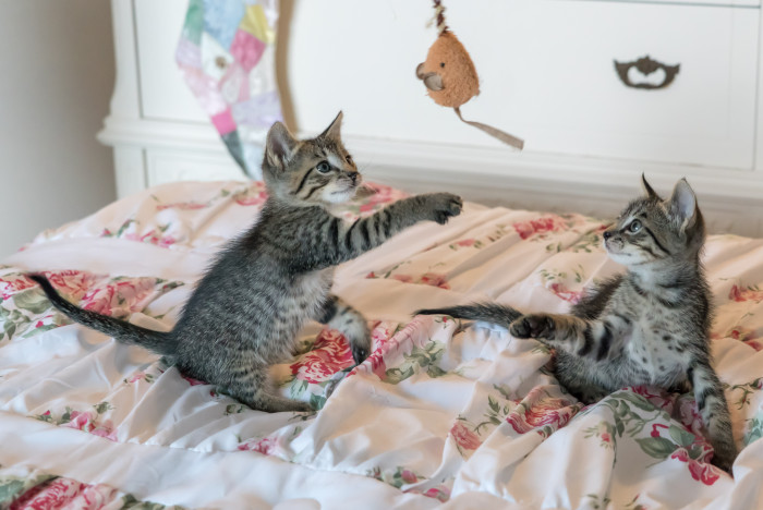 two kittens playing on a bed