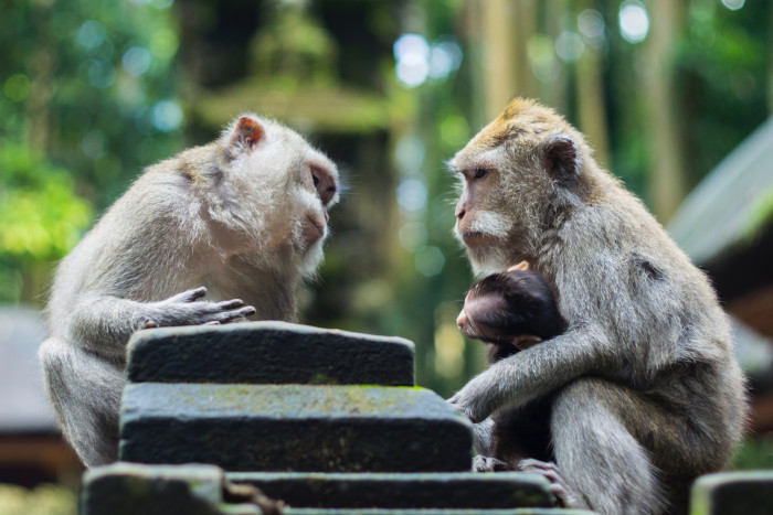 two monkeys starring at each other