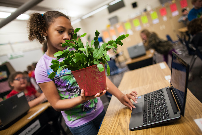 Student researching plant