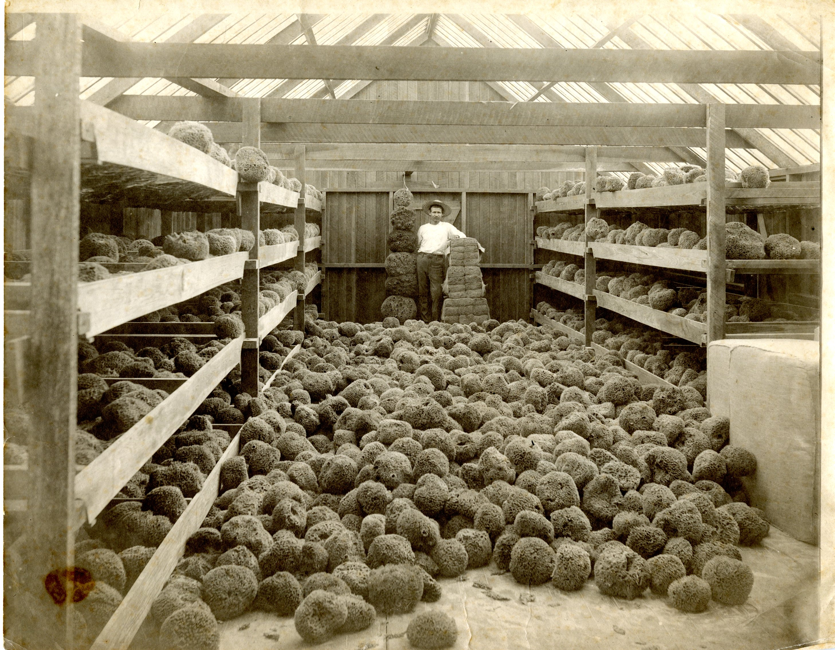 Man in an unidentified sponge warehouse in Tarpon Springs, Florida, undated.