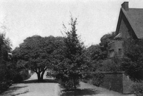 """Annie's Oak"", shown here in 1915, via the ""Report on a City Plan for the Municipalities of Oakland and Berkeley"" by Werner Hegemann"