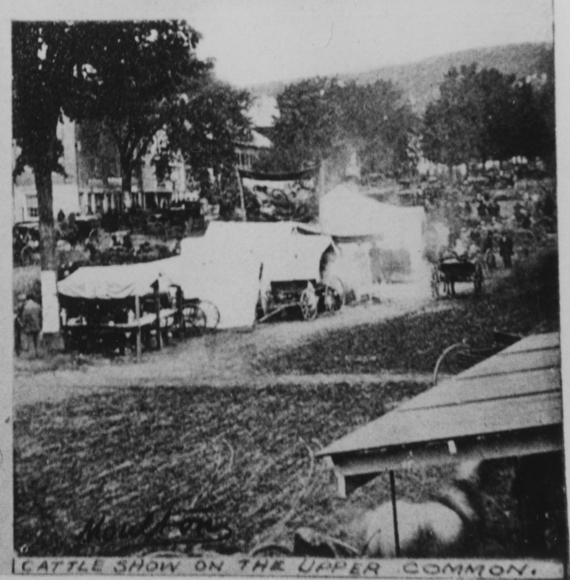Reproduction of 1860's (?)  photo of Cattle Show on the Upper Common