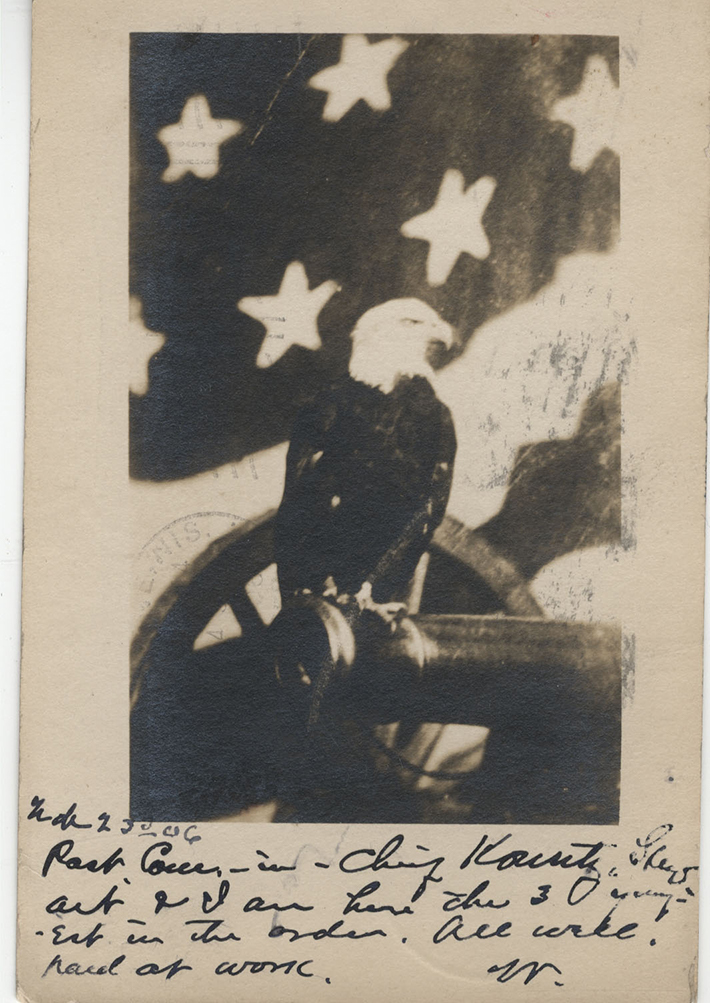 Postcard photograph of Old Abe the War Eagle seated on a cannon.
