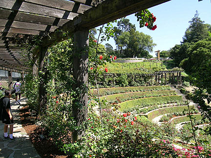 Berkeley Municipal Rose Garden (2004)