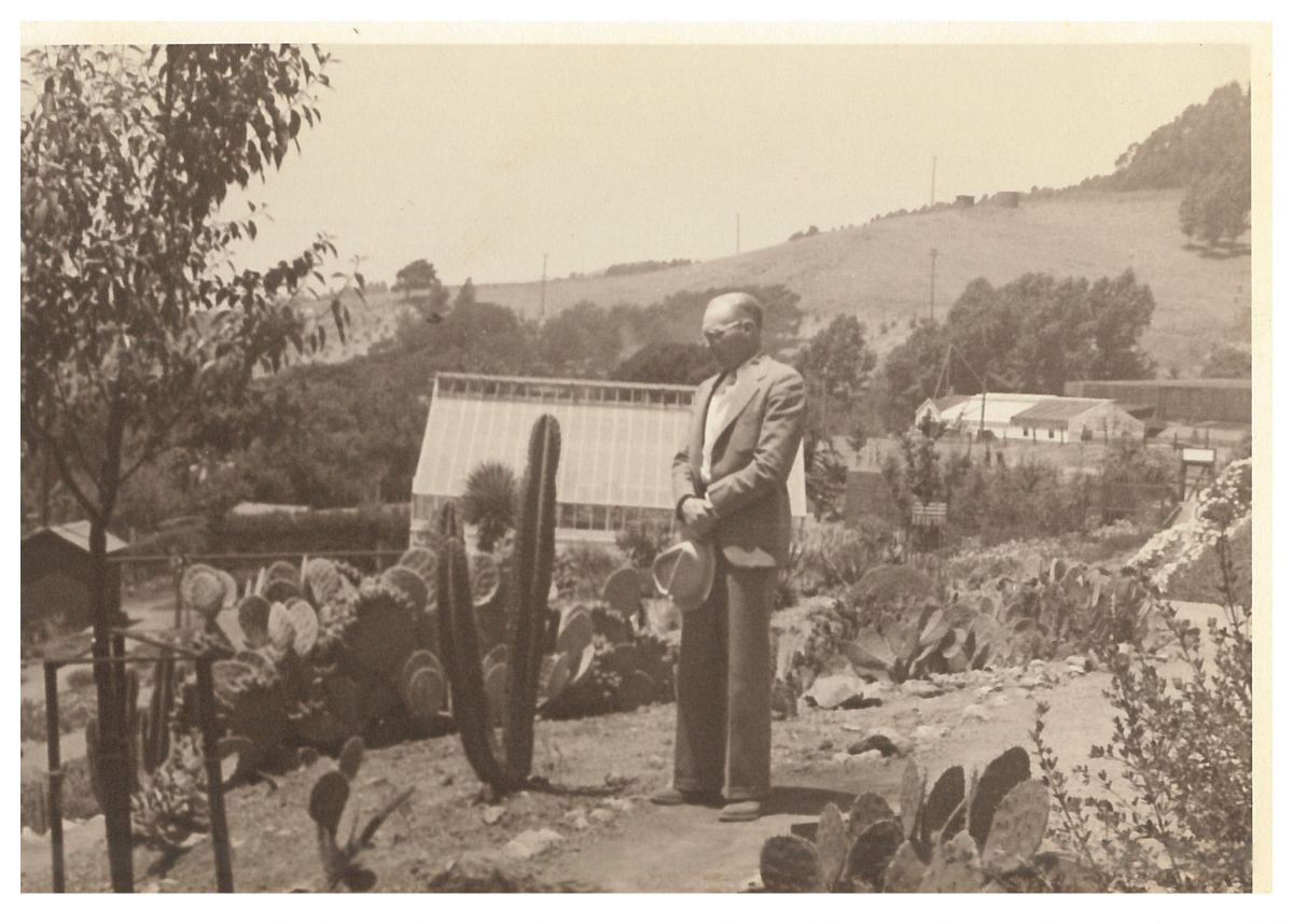 Botanical Garden Curator, Thomas Goodspeed, in the Deserts of the Americas garden at the UC Botanical Garden at Berkeley (c. 1930s)