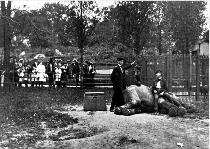 In its early form, the Menagerie at Central Park submitted animals to questionable treatment, as evidenced by this 1911 photo of a trainer and a dog perched on top of an elephant. Source: 1911 Department of Parks Annual Report.