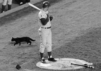 September 9, 1969: Ron Santo is on deck waiting to bat while eyeing a black cat running behind him on the field.