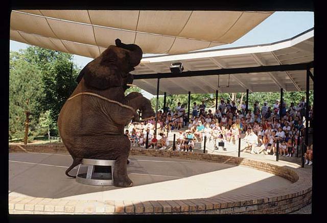 The elephant show