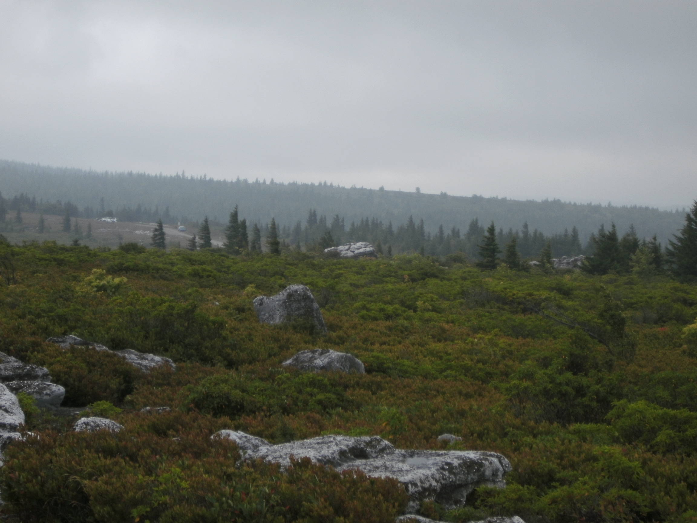 Dolly Sods.  (Photo by Steven Hart)