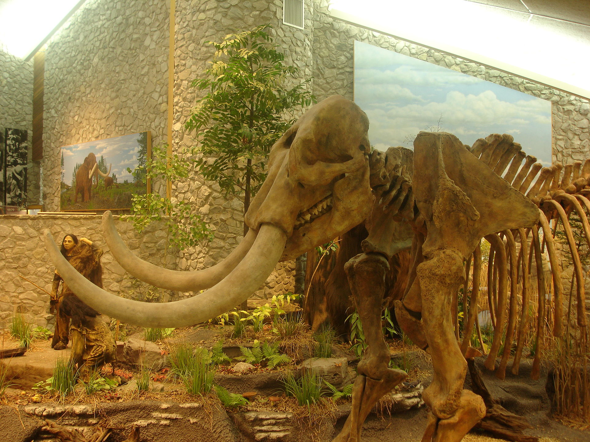 The museum features this mastodon skeleton as well as many other artifacts and fossils on display.