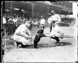 Joa the bear cub, the guest of honor at the first home game in Chicago Cubs history in 1916.