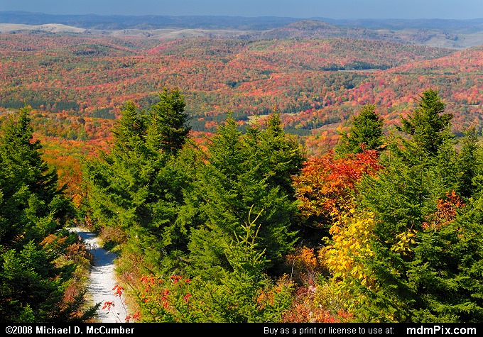 Whispering Spruce Trail has beautiful foliage and vegetation around its path. This trail goes all the way to the top of Spruce Knob but loops around so you can see a panoramic view of the mountains.