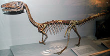 One of the Ranch's Treasure: The Coelophysis Fossil
