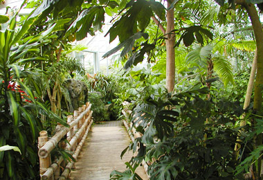 Conservatory: Rainforest Biome