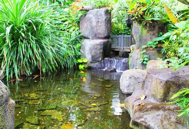Conservatory: Pacific Island Water Garden