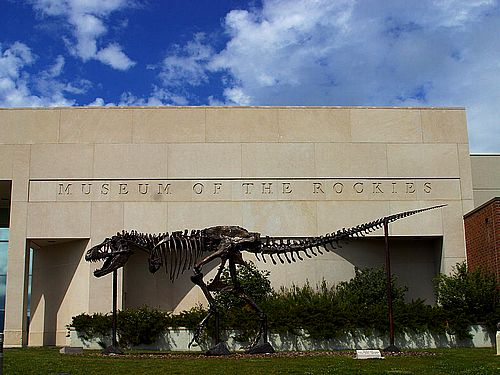 The Museum of the Rockies is a Smithsonian Affiliate and a Federal Repository for fossils.