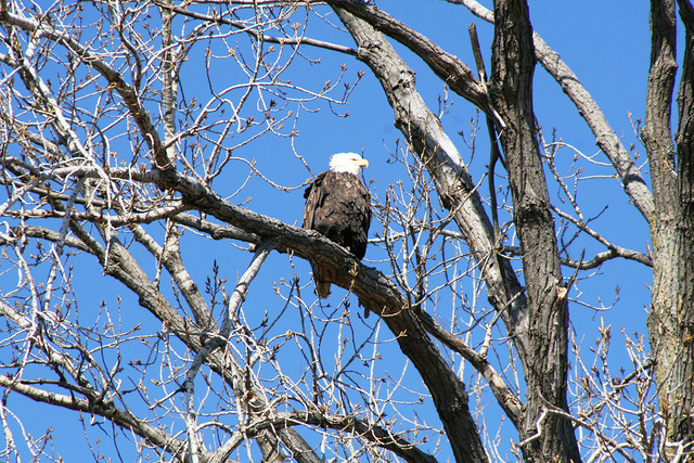 Wildlife at Dam courtesy of TeamSaintLouis.jpg