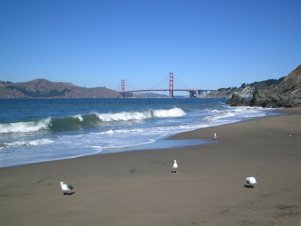 Seagulls on the beach. (Photo Courtesy of City Data.)